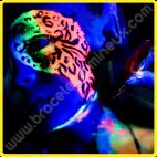 Peinture Fluorescente Corps 10 ml
